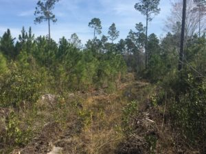 Timber Land for Sale in Millwood Plantation, GA
